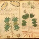 Il manoscritto di Voynich