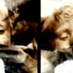 Immagini-Rosalia-Lombardo-3-150x150 Home Page Misteri della Storia