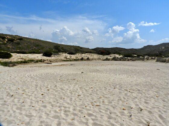 DSCN7653-560x420 Aggiornamento: Il mistero dei cerchi nella sabbia.