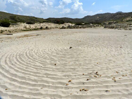 DSCN7655-560x420 Aggiornamento: Il mistero dei cerchi nella sabbia.