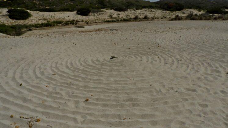 DSCN7710-747x420 Aggiornamento: Il mistero dei cerchi nella sabbia.