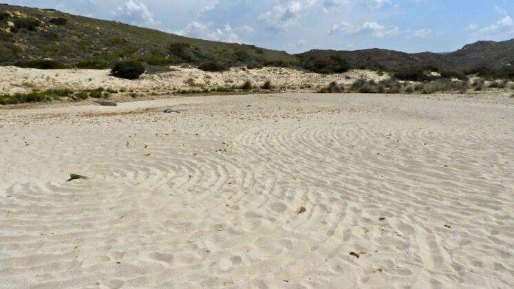 DSCN7712-747x420 Aggiornamento: Il mistero dei cerchi nella sabbia.